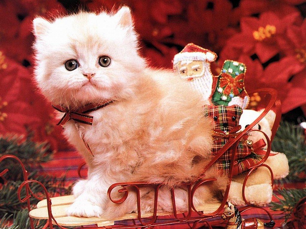 Un chat pour noel - Image de chat de noel ...